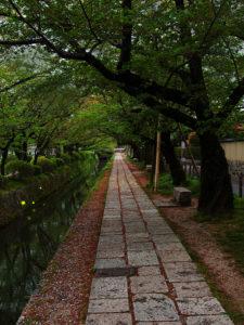 「哲学の道」は、琵琶湖疏水分線に沿った約2㎞の歩道