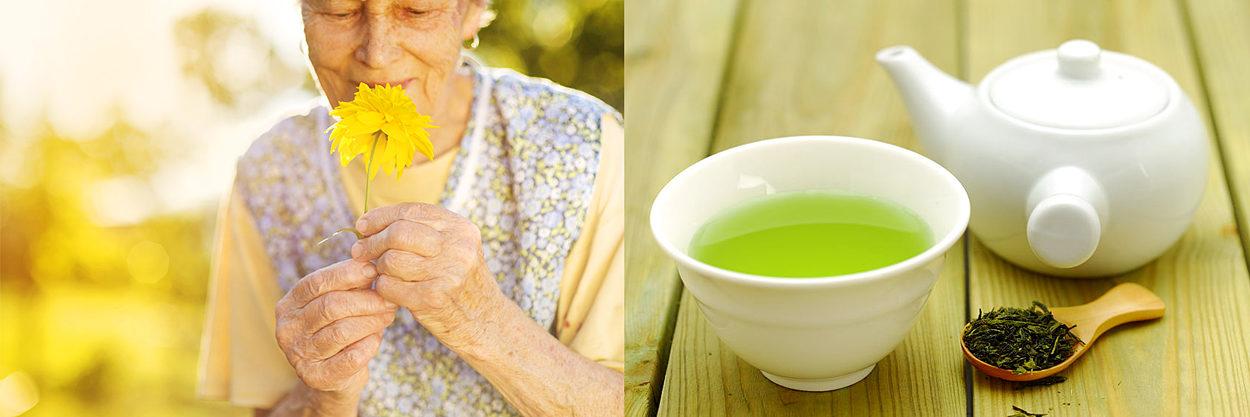 五感を使って、毎日心地良いものに触れる。緑茶の健康成分は、科学的にも証明されている。