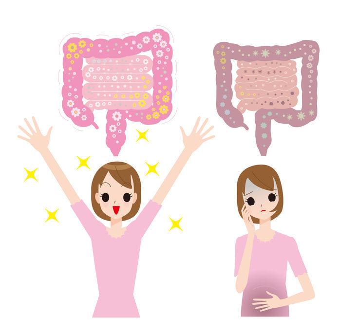 体を守る免疫細胞の7割が腸に集中。「腸活」の基本は規則正しい生活から。